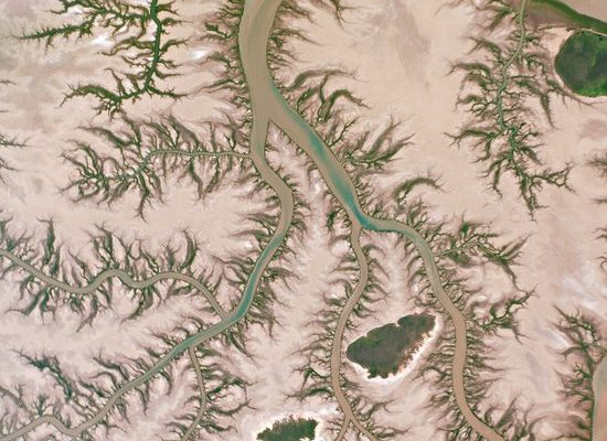 Bright green mangroves line the intricate waterways of Australia