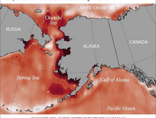 Summer Sea Surface Anomaly 2019